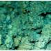 Зеленый темный, пигмент (мика) перламутровый сухой