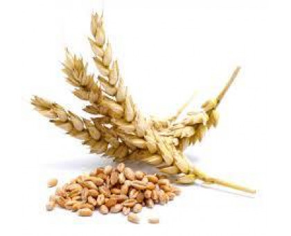 Протеины пшеницы