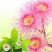 Эвкалипт и Мята (Eucalyptus & Spearmint) Ароматическое масло