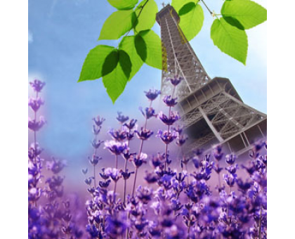 Французская лаванда (French Lavender) Ароматическое масло