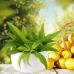 Лимонная вербена (Lemon Verbena) Ароматическое масло