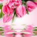 Тюльпаны (Tulip) Ароматическое масло
