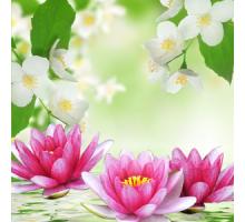 Водяная лилия и Жасмин (NG Water Lily & Jasmine) Ароматическое масло
